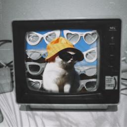 challenge challengepicsart picsartedit edit picsart cat tv animal blackandwhite cute cutecat cuteanimal shadeffect effect effectpicsart freetoedit rcontv ontv