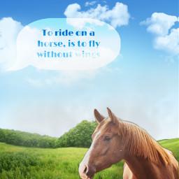 horse fly freetoedit