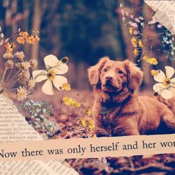 freetoedit dog fall madebyme vote4meplz mlbforever srcvintageaesthetic vintageaesthetic