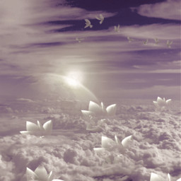 madewithpicsart background clouds backgrounds sky lotus makeawesome freetoedit