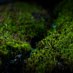 smallworld moss landscape plant green atmosphere beautiful light almostmacro macro photo photography canon canon700d photoshop photoshopcs5 freetoedit
