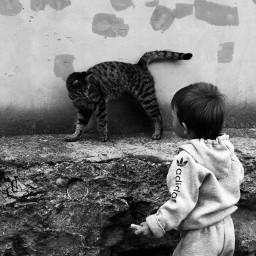 blackandwhite cat myson