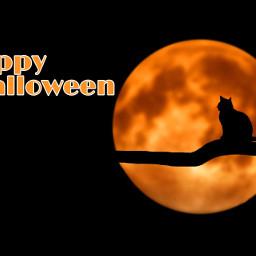 halloween spooky orange cat scary october viral famous addison avani zoe charli dunkin aesthetic makeup heart crown freetoedit fchappyhalloween2020 happyhalloween2020