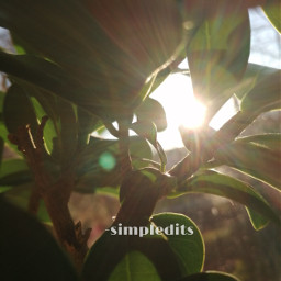 leafs plant powerfull nature aesthetic viral famous addison avani zoe charli dunkin trend trending nelsonmandela tattooday pcbeautifulbirthmarks happytaeminday summer pcpowerofnature powerofnature