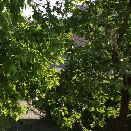 tree nature powerfull leafs plant viral famous addison avani zoe charli trending trend fanartofkai tattooday happytaeminday nelsonmandela youtube summer kimnamjoon follow peace pcpowerofnature powerofnature
