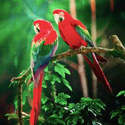 parrots jungle freetoedit