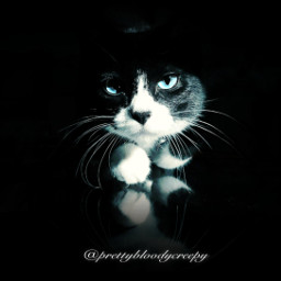 photography aesthetic dark darkness cat kitty light cute adorable blue cateyes shadow pet mypet fur donotsteal freetoedit