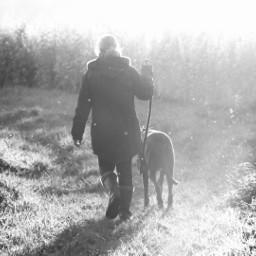 backlight blackandwhite dogwalk playoflight