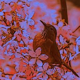 bird flowers freetoedit