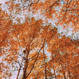 freetoedit fall nature weather autumn hike canada ontario pcpowerofnature powerofnature