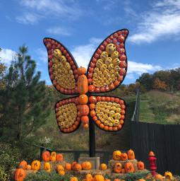 freetoedit pumpkins butterflies dollywood madebyme vote4meplz mlbforever pcpowerofnature powerofnature