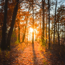 autumn fall goldenhour backlit fallcolors autumnbackground background freetoedit