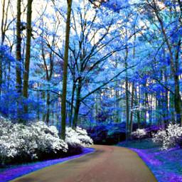 blue sceanery woods freetoedit