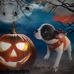 sweetpuppy sweetpupper halloweenpuppys freetoedit