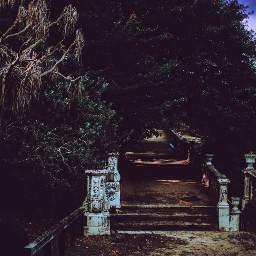 photography spooky spookyseason spookyhalloween forest enchanted enchantedforest bewitched nature naturephotography tree travel galicia halloween halloweenspirit halloweentime horror horrorinspired terror dark vampire vampireaesthetic freetoedit