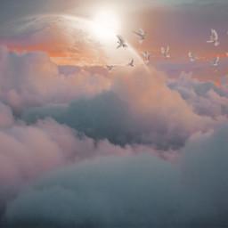 cloud clouds bird birds replay freetoedit