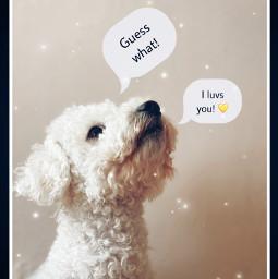 cute puppylove mansbestfriend freetoedit