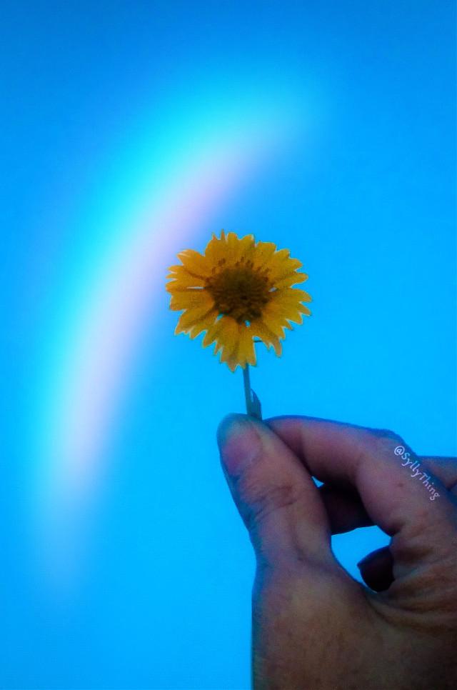 #wildflower #prismmask #filtereffect. #bluesky #simple #getsylly #blessed #beauty #originalphoto #heypicsart#madewithpicsart #flower #beautyiseverywhere