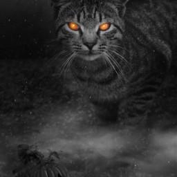 halloweenscream happyhalloween blackcat editedstepbystep halloweenvibes adjusttool madewithpicsart freetoedit