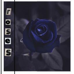 bluerose rose roses blue flower freetoedit