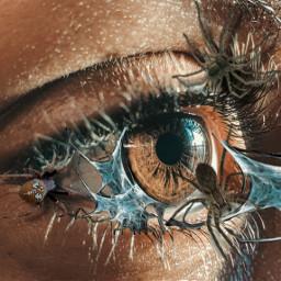 spider eye spiders spiderweb freetoedit