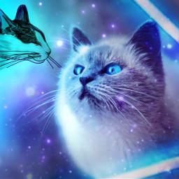 freetoedit kinora myremix cat cats