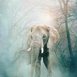picsart myedit myremix surreal freetoedit elephant fog forest
