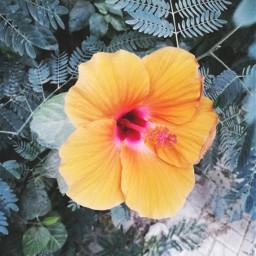 flower nature yellowflower pcpowerofnature powerofnature