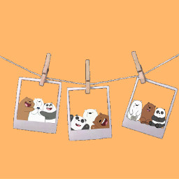 bears polabear panda bear brownbear animalfriends friends friend freetoedit