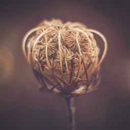 nature wildflower simple closedflower appreciatenaturearoundyou freetoedit