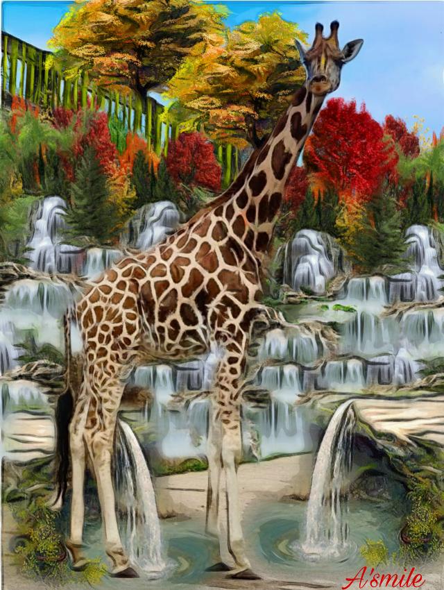 #@asweetsmile1 #background #giraffe #waterfalls #blendedimages #blend #creative #creativeart #zoo #simple