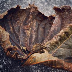 leave autumn