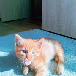 cat freetoedit