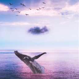 whale birds clouds water background backgrounds remixit freetoedit
