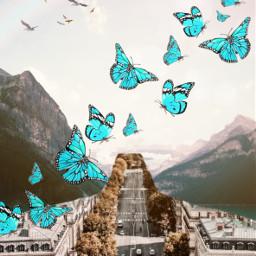butterfly magic roadtrips freetoedit