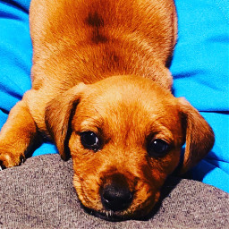 puppy sally love pcwhatmakesmehappy whatmakesmehappy