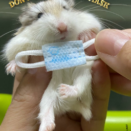 animalart hamster mask myedit freetoedit
