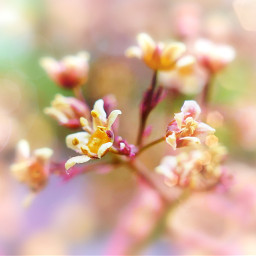 flowers pink lensflare focused mothernature motherearth mothernaturecanbebeautiful aesthetic garden pfp wallpaper freetoedit