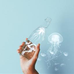 jellyfish freetoedit