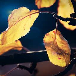 photography leaves autumn fall backlight mypic freetoedit