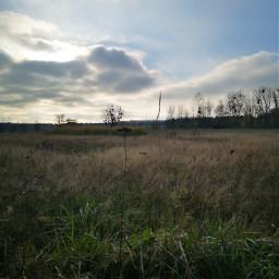 landscape grasses remixit freetoedit