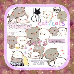 freetoedit kittylove cats kittys kittens
