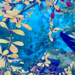 freetoedit nature colorful foliage leaves yellow red