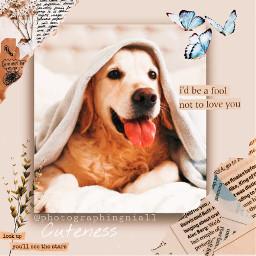 dog dogedit cute cuteedit cutedog cutedogedit animal cuteanimal aesthetic vintage vintageaesthetic replay freetoedit