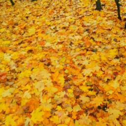 fall leaves leaf atumn aesthetic charli dunkin addison avani zoe viral famous trend trending