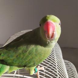 parrots pcwhatmakesmehappy whatmakesmehappy