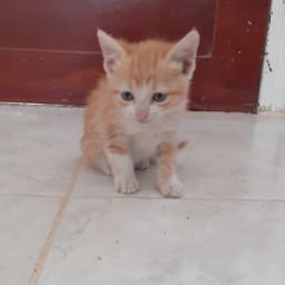 cat gato babycat cute pcwhatmakesmehappy whatmakesmehappy