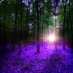 curvestool forest woods purple freetoedit