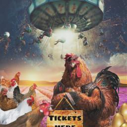 chicken op freetoedit