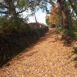 autumn autumncolors nature italy🇮🇹 italy